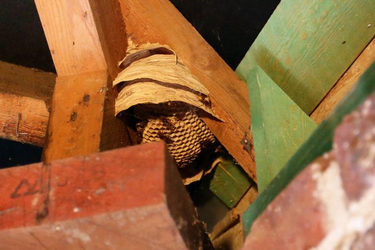 Illustratiebeeld. Een wespennest in een dakgebinte.