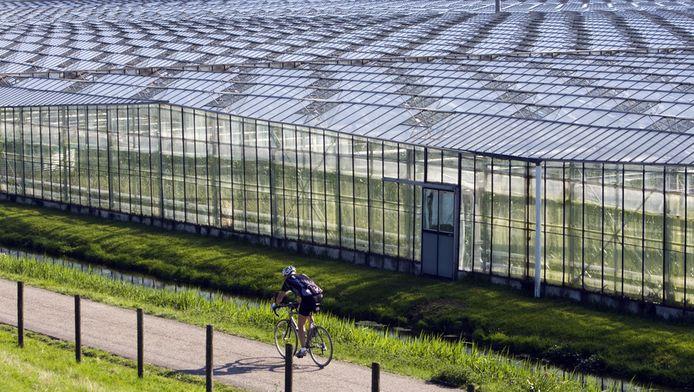 Glasbouw Kassen in het Westland.