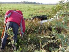'Natuurwerkdag' in Reeuwijkse polder