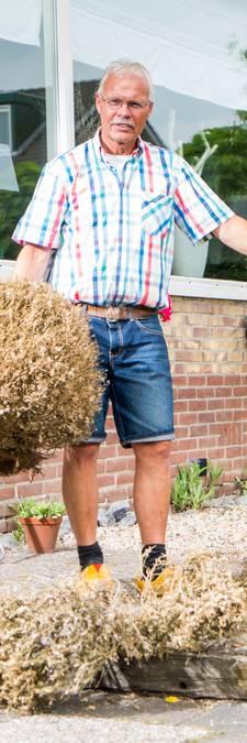 Buxusmot vreet struiken kaal (en dit doe je er tegen)