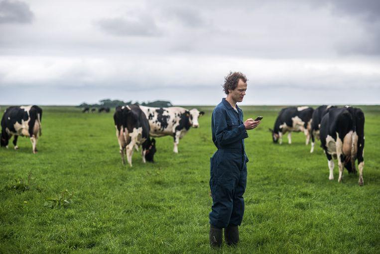 Boer Niels Rutten gebruikt de app van Connecterra om het welzijn van zijn koeien in de gaten te houden. Beeld Joris van Gennip
