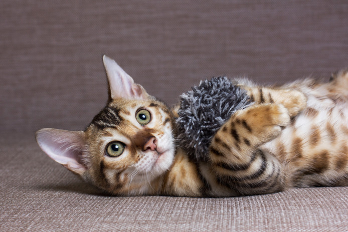 KGA Kattenoppasservice zoekt kattenoppassers in heel Nederland.