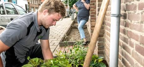 Stoeptegels maken plaats voor azalea's in Osse Zeeheldenwijk
