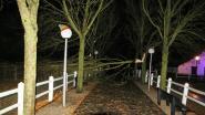 Plopsaland De Panne is morgen woensdag open ondanks stormschade