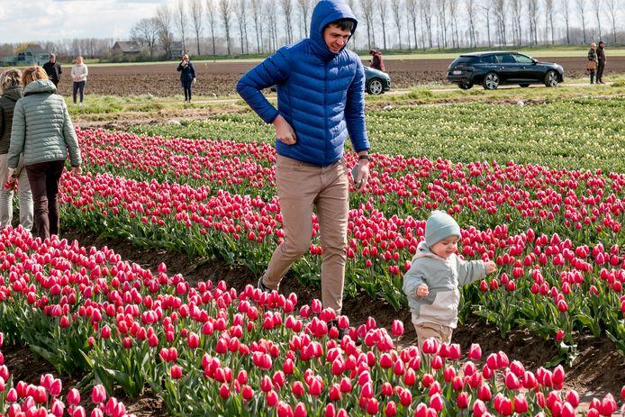 De tulpenvelden in de Meerdonkse polder lokken heel wat volk.