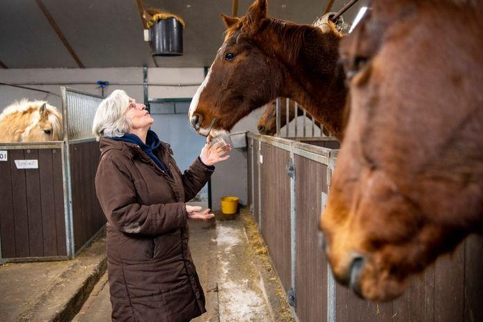 Rika Lassche vangt 44 oude manegepaarden op.