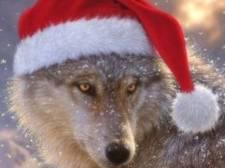 'Sheeplover' Naya is de eerste wolvin met een eigen Instagram-account in België