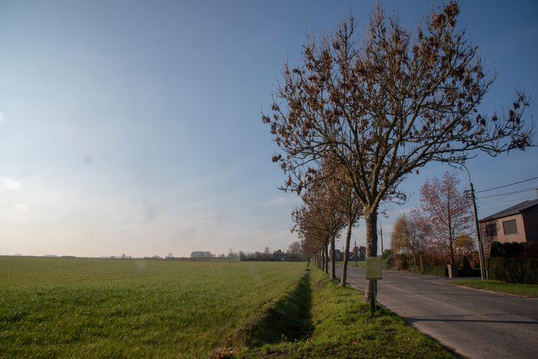 De bomenrij in de Scheldeweg is ziek en veroorzaakt schade aan het drainagesysteem van de landbouwgrond ernaast. De gemeente wil ze kappen.