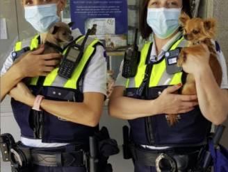 """16 onverzorgde honden in beslag genomen: """"Overal rommel en stank van uitwerpselen"""""""