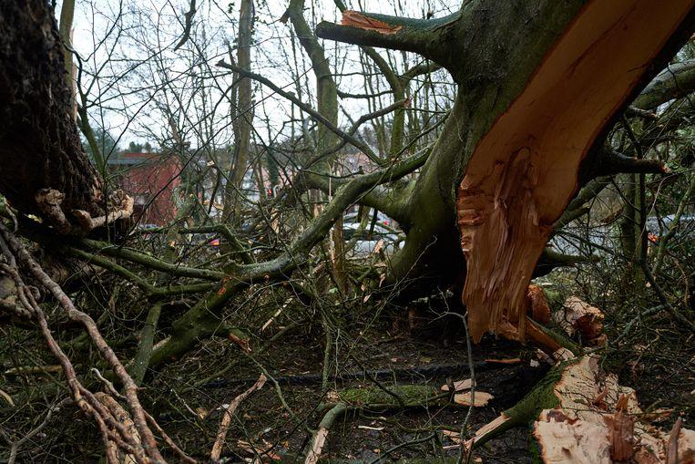 Stormschade in Watermaal-Bosvoorde: beeld ter illustratie.