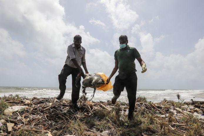 Leden van de milieudienst nemen een dode schildpad mee voor verder onderzoek.