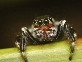 Waarom je de spin in een ruimte altijd ziet