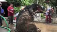 'Gigantische rat' ontdekt in riool Mexico-City