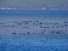 Grote reddingsoperatie voor 270 gestrande walvissen bij Tasmanië