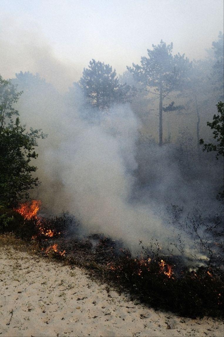 De brand ontstond vrijdagmiddag aanvankelijk als heidebrand, al snel ter grootte van een hectare. Later sloeg het vuur over naar het bos. ( ANP) Beeld ANP