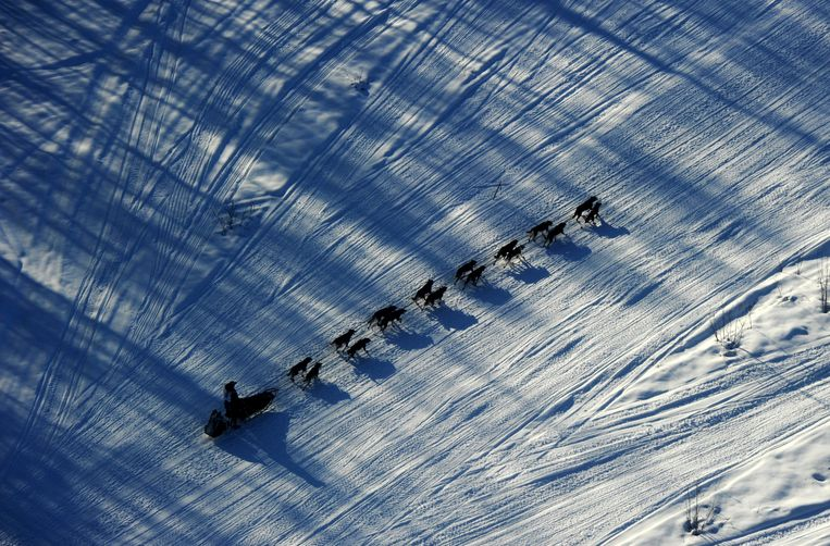 FILE - In this March 2, 2014, file photo, musher Nathan Schroeder drives his dog team down the trail just after the start of the Iditarod Trail Sled Dog Race near Willow, Alaska. The 46th running of Alaska's famed Iditarod Trail Sled Dog Race kicks off Saturday, March 3, 2018, amid the most turbulent year for organizers beset by multiple problems, including a champion's dog doping scandal, the loss of major sponsors, discontent among race participants and escalating pressure from animal rights activists, who say the dogs are run to death or left with serious injuries. (Bob Hallinen/Anchorage Daily News via AP, File) Beeld AP
