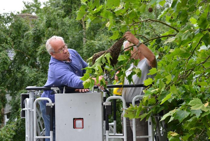 Eem imker haalde het bijennest uit de boom in Breda.