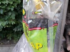 Vliegen teisteren Nieuwdorp opnieuw: 'ik loop de hele tijd te meppen'