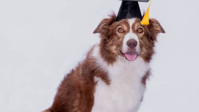 Nederlandse hond met epilepsie blijkt genie: 'Ze kan 140 speeltjes bij naam herkennen'