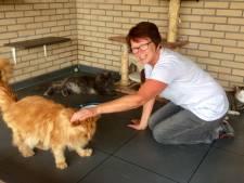 Toptijd in kattenpension: Vijfsterrenhotel voor poeslief