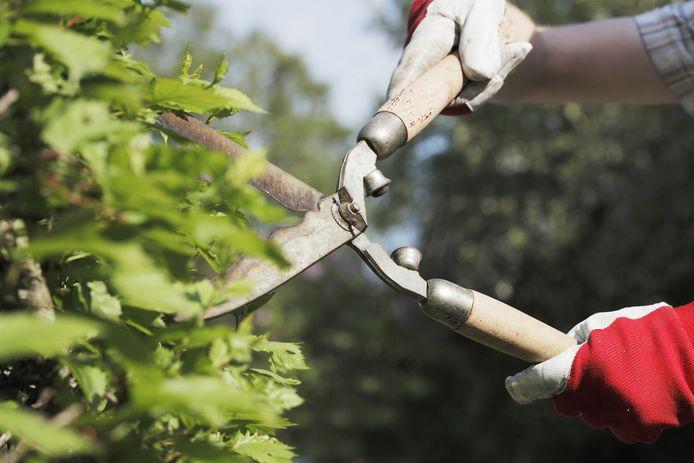 'Zij vond hakken en zagen in de tuin wel een goed idee en ik deed gezellig mee.' Foto ter illustratie.