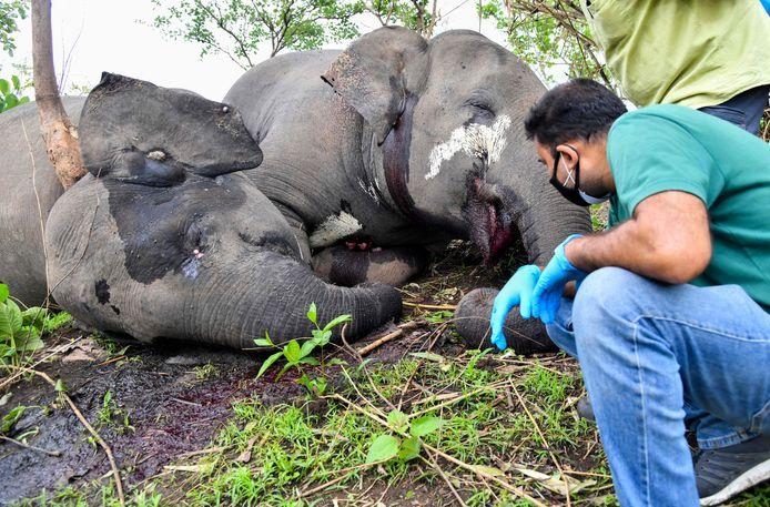 Confrontaties tussen olifanten en mensen leiden meer dan eens tot doden, zowel mens als dier.