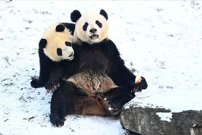 Winterpret voor Bao Mei en Bao Di.