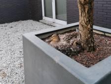 Eieren voor advocaat in Etten-Leur