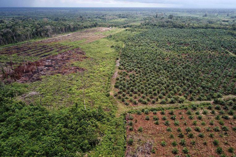 Luchtfoto van een palmolieplantage (rechts) in een beschermd natuurgebied (Rawa Singkil wildlife reserve) in Atjeh op het Indonesische eiland Sumatra.  Beeld AFP