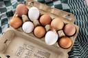 Wat is het verschil tussen een wit en een bruin ei? Foodjournalist Laura de Grave geeft antwoord op deze en andere vragen over eieren.