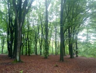 Bos van 13 hectare in Oostmalle voortaan voor iedereen toegankelijk