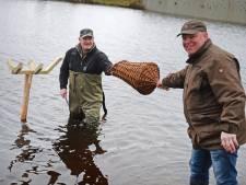 Veilig plekje op Vriezenveense wateren geen garantie voor nageslacht eend: 'Het gevaar ligt altijd op de loer'