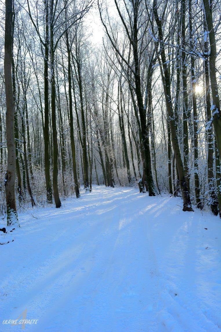 Het bos in De Gavers