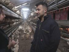 Eus gaat langs bij pluimveehoudster: 'Animal Rights stelt zich boven de wet'