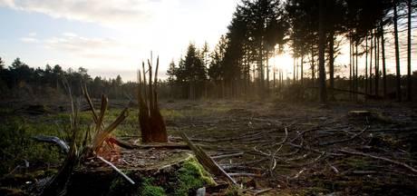 Dood hout zorgt voor nieuw leven op Willem III en de Remmerdense Heide