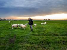 Grondeigenaren polder Rijnenburg boos om uitstel woningbouw: 'Wij gaan geen windmolens bouwen'