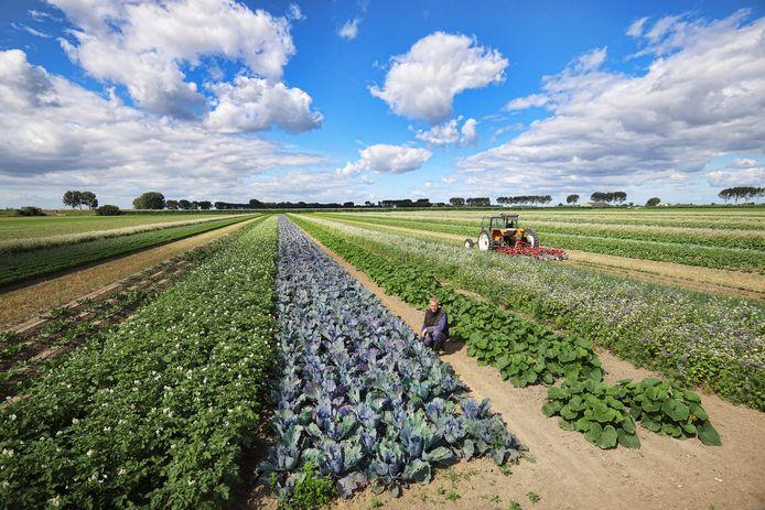 Cornelis Mosselman schakelde dit jaar over van traditionele landbouw naar biologisch.