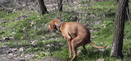 Hondenbezitters zijn soms hardleers: proef in Waalwijk moet gedrag veranderen