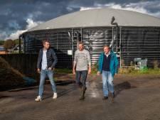 Deventer boeren willen gas maken van koeienmest: 'We kunnen net zoveel energie opwekken als anderhalve windmolen'
