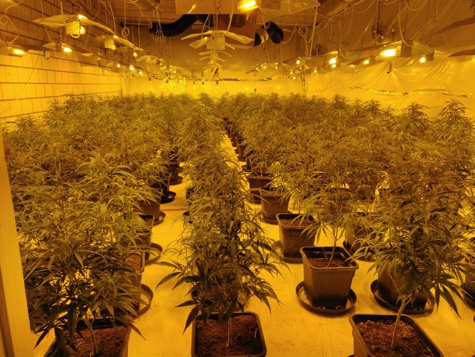 De cannabisplantage in de Wayenborgstraat in Mechelen.