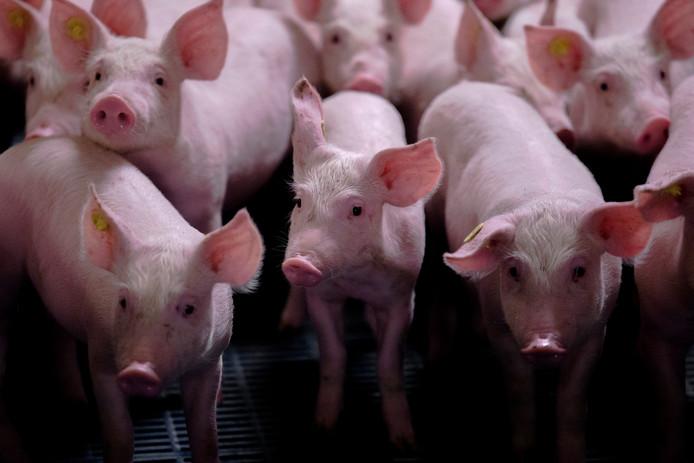 De installatie in Oss moet varkensmest gaan bewerken.