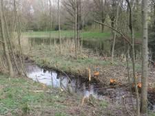 Raadsleden verbolgen over groenonderhoud in broedseizoen: 'Geef Staddijk de status van natuurgebied'