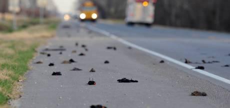 Nouvelle pluie d'oiseaux morts aux Etats-Unis