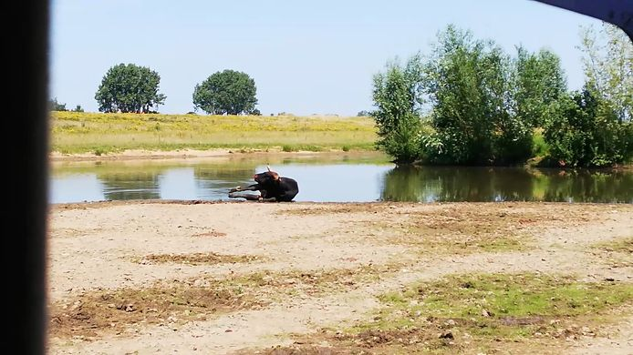 Schieten stier taurus keent natuurbeheer schoten schotse hooglander tauros koeien koe