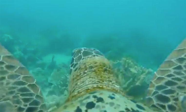 Magisch: deze schildpad neemt je mee op reis