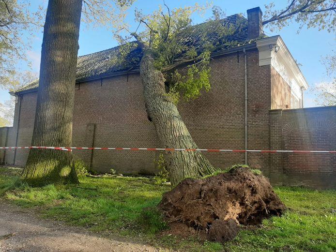 De eikenboom viel tijdens de storm om tegen de oranjerie