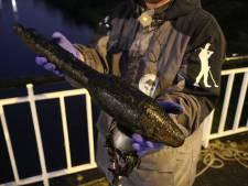 Magneetvisser Bryan haalt WO-II explosief uit water: 'Mogelijk antitank-granaat die met Bazooka werd afgevuurd'