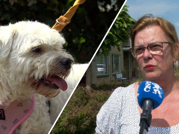 Na 14 dagen zwerven is hondje Loeka eindelijk weer terug bij Cobie