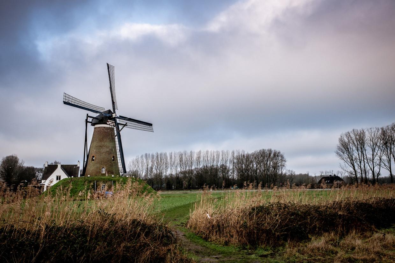 De Roosdonck, een windmolen even buiten Nuenen, is op verschillende doeken van Vincent van Gogh te bewonderen. Beeld Hans Avontuur