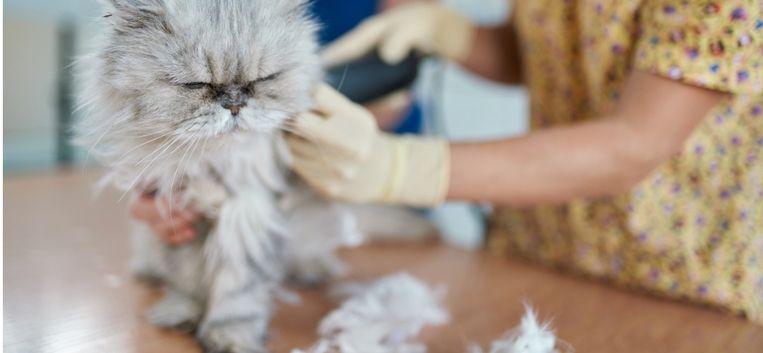 """Sylvia Witteman: """"De trimster had onze kat Lola helemaal kaalgeschoren"""""""